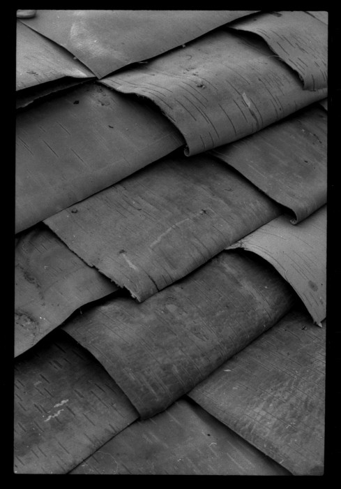 birch-bark-489x700.jpg