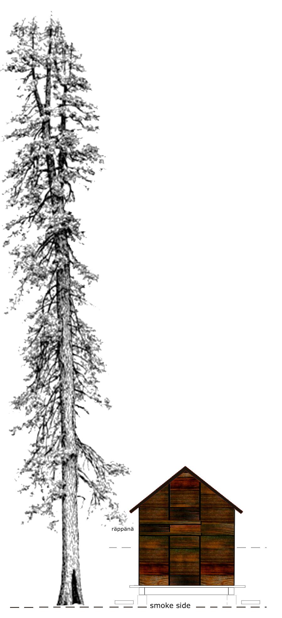 SAUNA_SIDE_ELEV_TREE.png