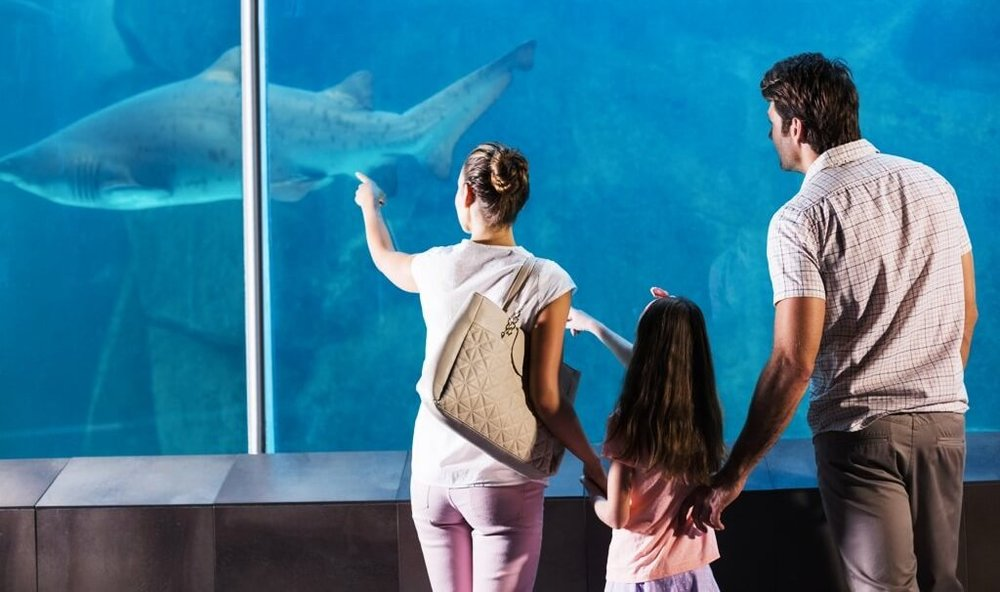 Shark Adventure at Oklahoma Aquarium - Explore Tulsa Near The Campbell Hotel