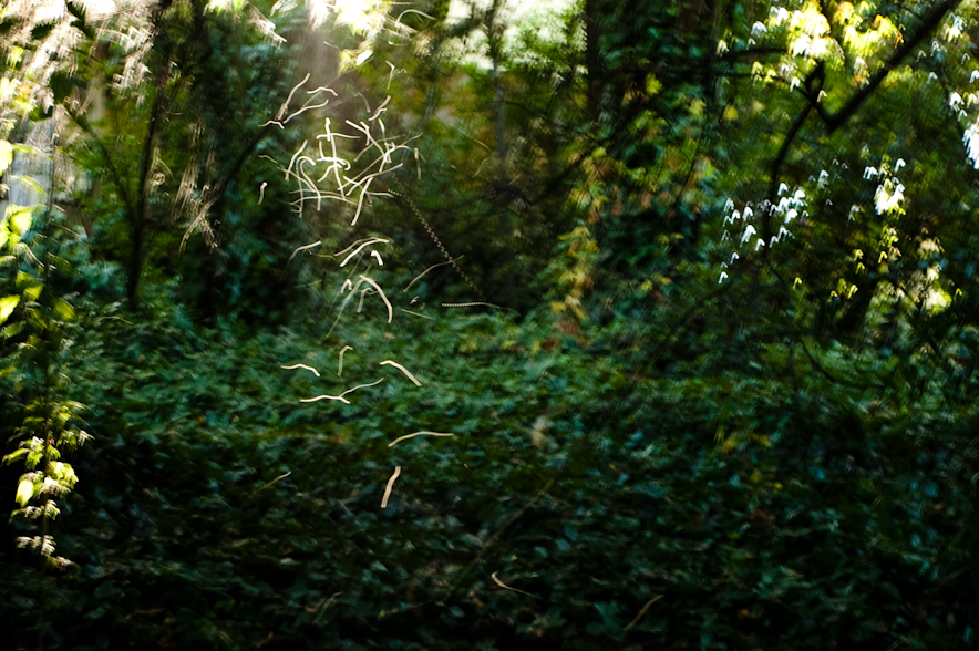 These little insects were flying only in the areas where rays of sunlight were coming through the trees. As a result, their wings lit up. Captured on film they just look like trails of light.