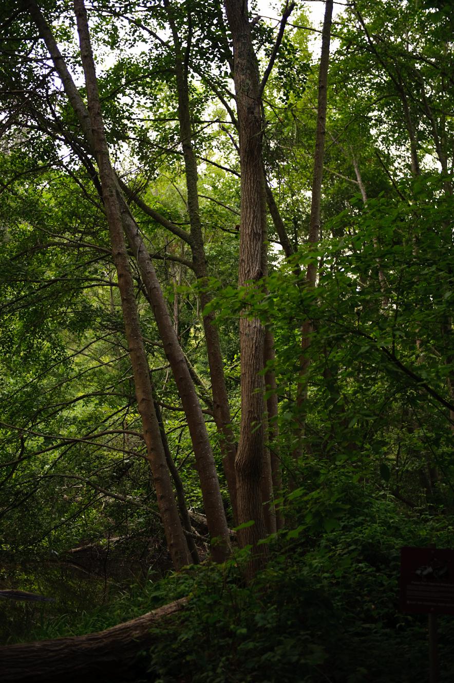Tilden Regional Park, Berkeley