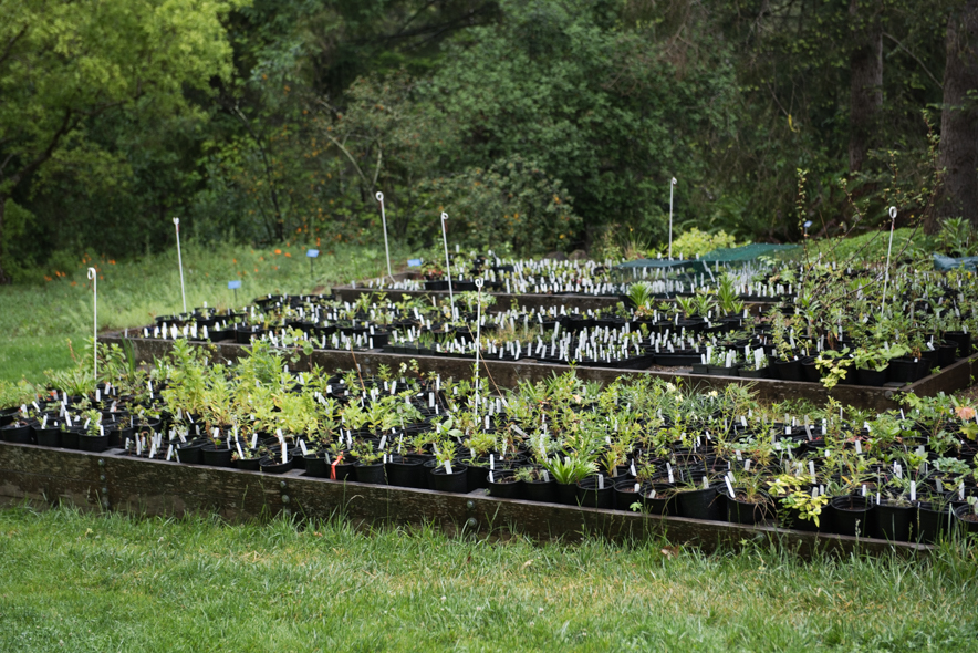 Plant sale area