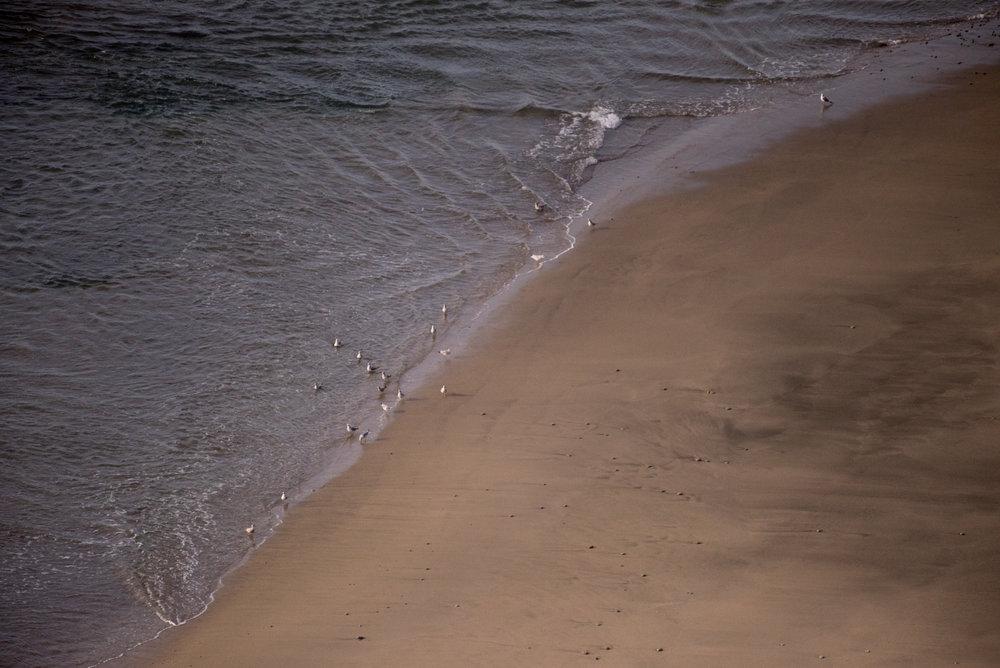 Gulls on Driftwood Beach
