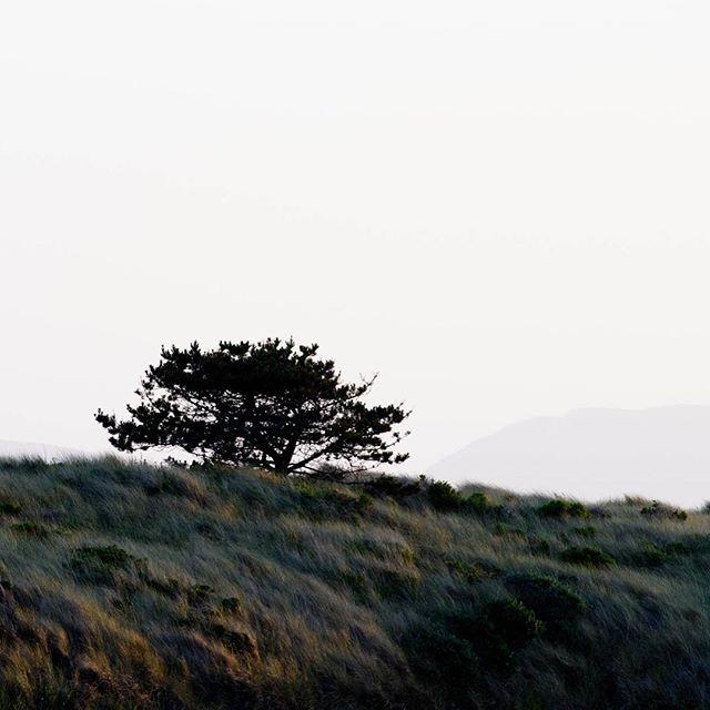 Coastal dunes at dusk