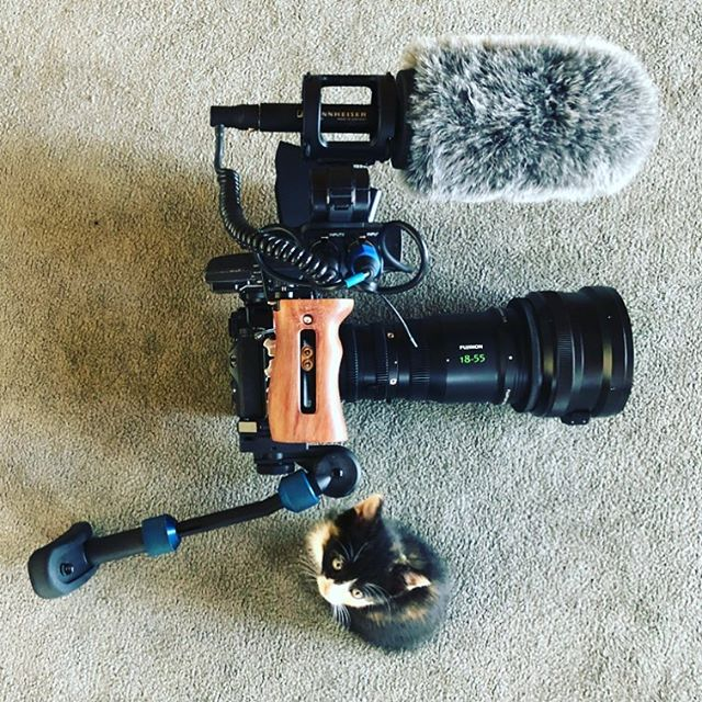 the intern  #onlocation . . . #sonyalpha #a7riii #fujinon1855 #slrmagic #slrmagicanamorphot65 #smallhd #sennheiser #smallrig #kitten