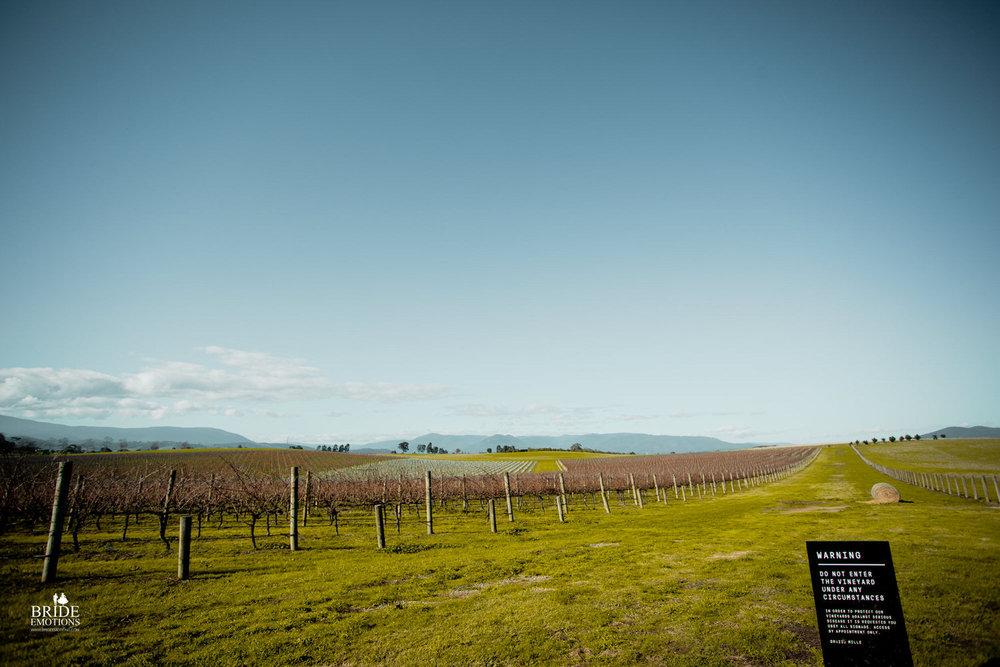 Yarra valley wineries