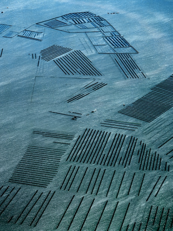 Oyster industry near Botany Bay, New South Wales, Australia.  The grid pattern is formed by the oyster racks.