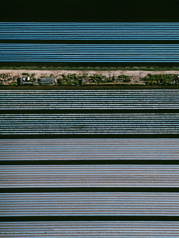 Vegetable gardens, Spearwood near Perth, Western Australia, Australia.  Rows of vegetables covered with plastic, contrast against the rich soil.