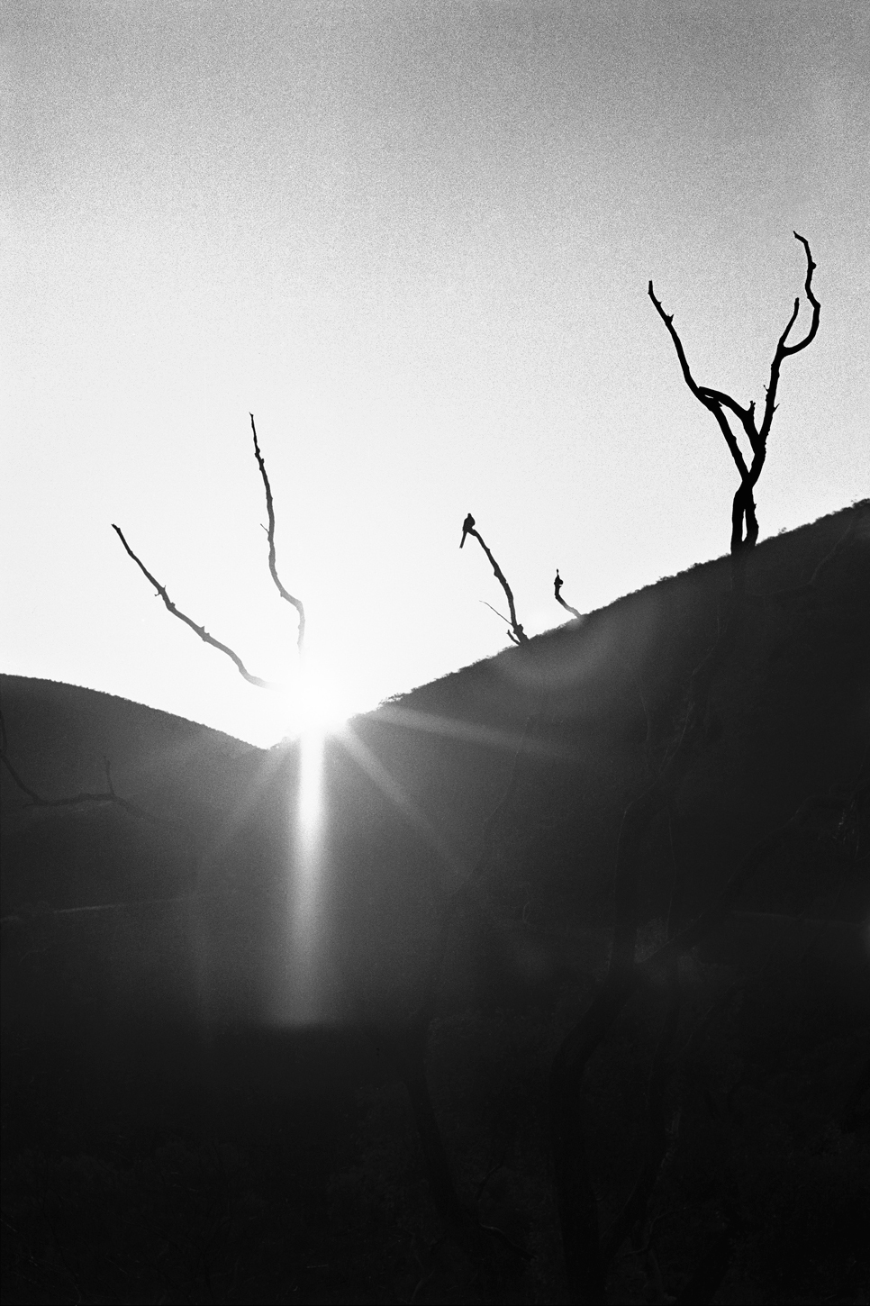 Sunrise, Hamersley Range WA, 1968
