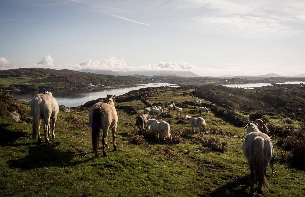 Errislannan-Our-Ponies.jpg