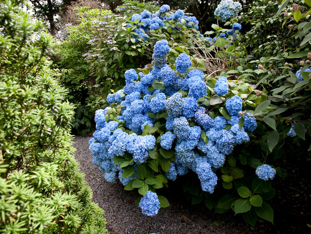 Errislannan_Garden-F.jpg