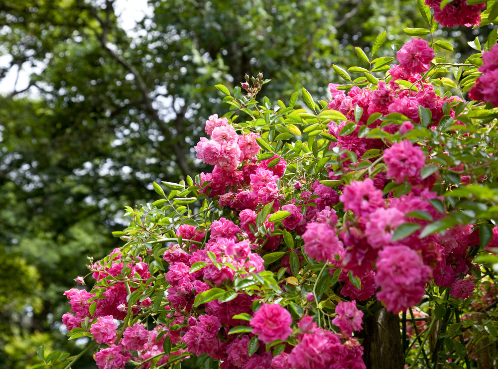 Errislannan_Garden-G.jpg