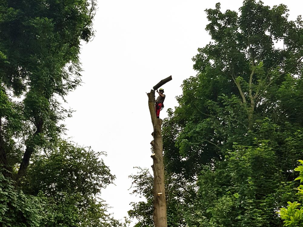 Tree-Surgery-2.png