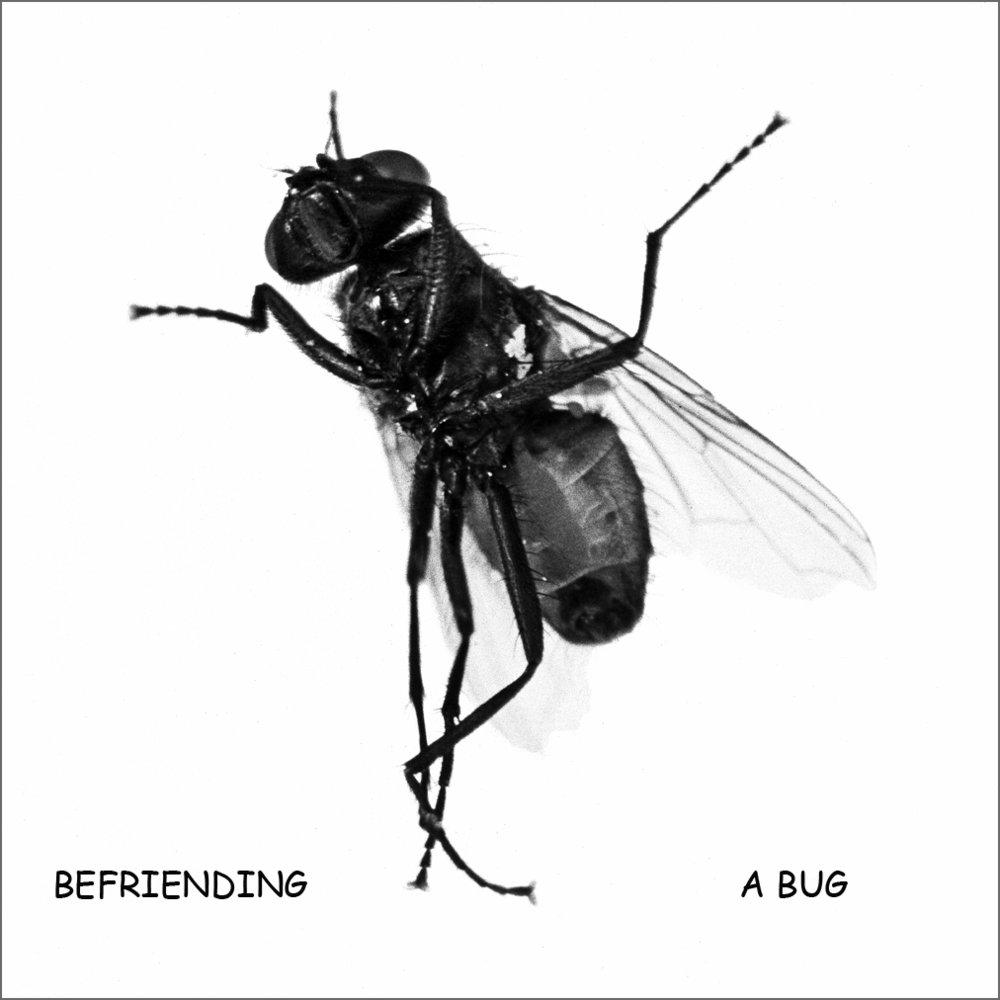 Male housefly