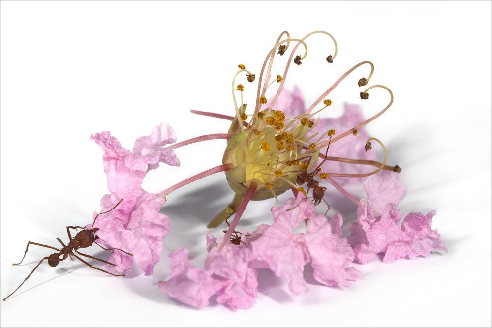 OFFERING - PINK FLOWER