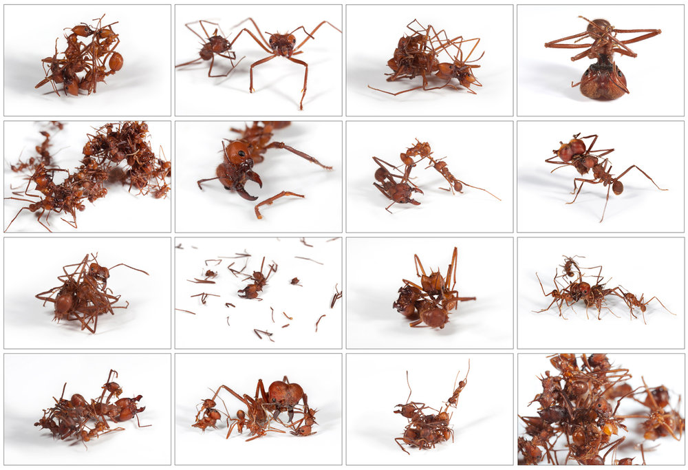 ant_war_grid.jpg