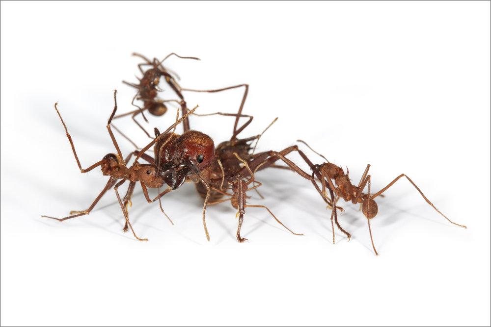 ant_war_17_4g.jpg