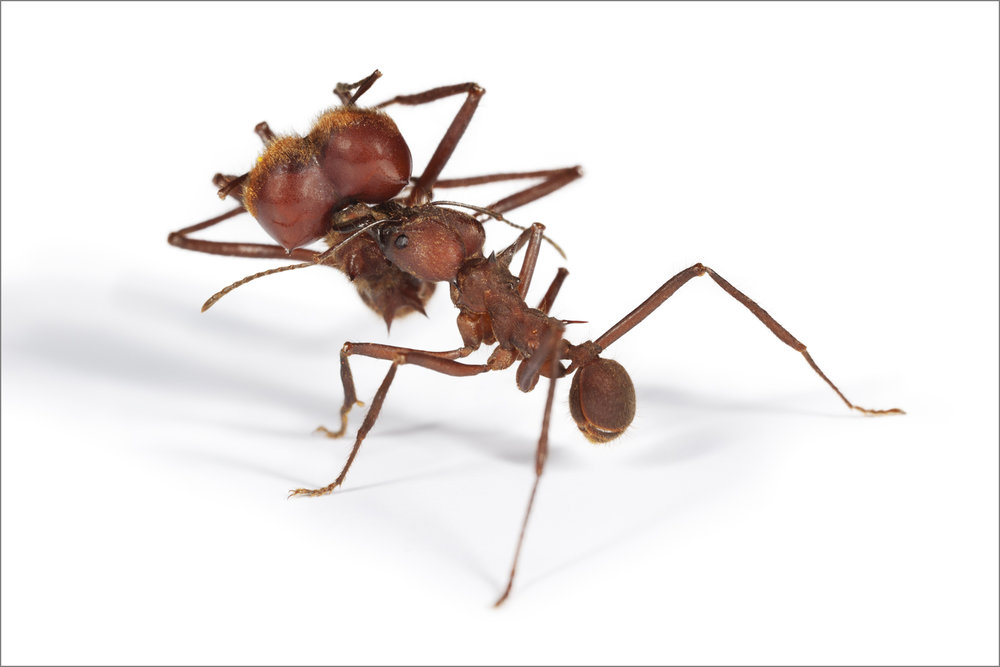 ant_war_18_4g.jpg