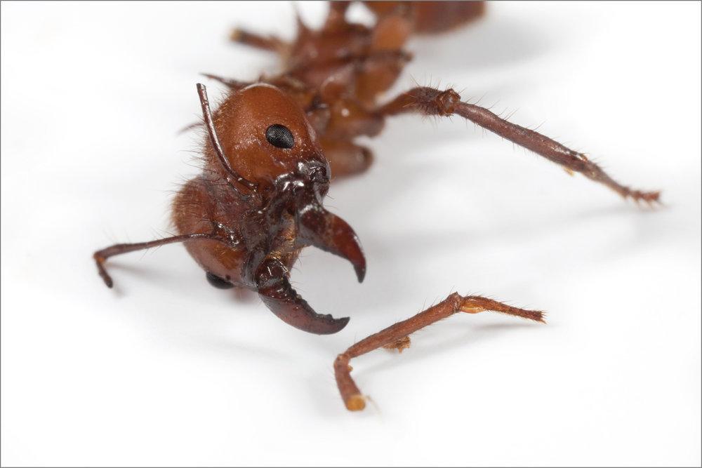 ant_war_10_4g.jpg