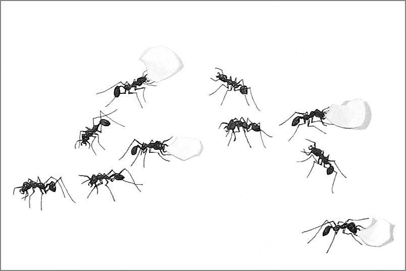 ant_draw_detail_4g.jpg
