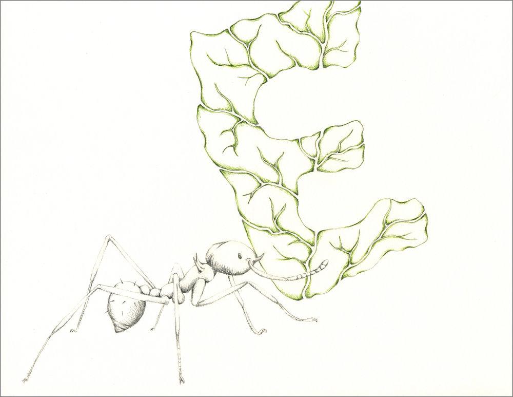 ant_draw_e1_4g.jpg