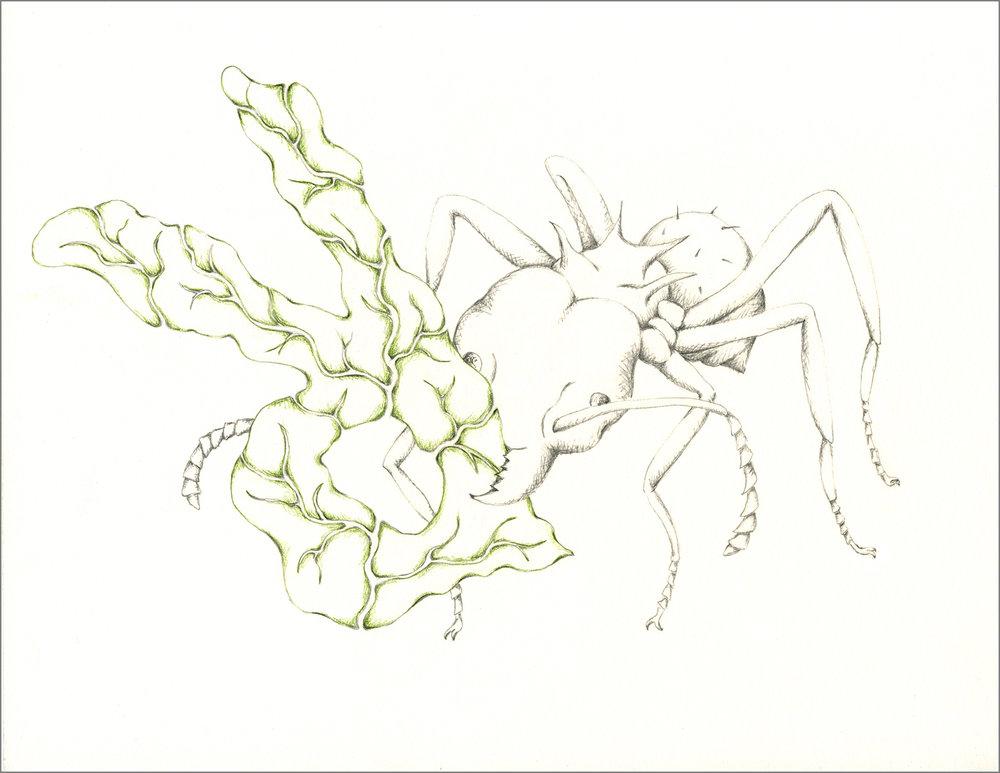 ant_draw_r_4g.jpg