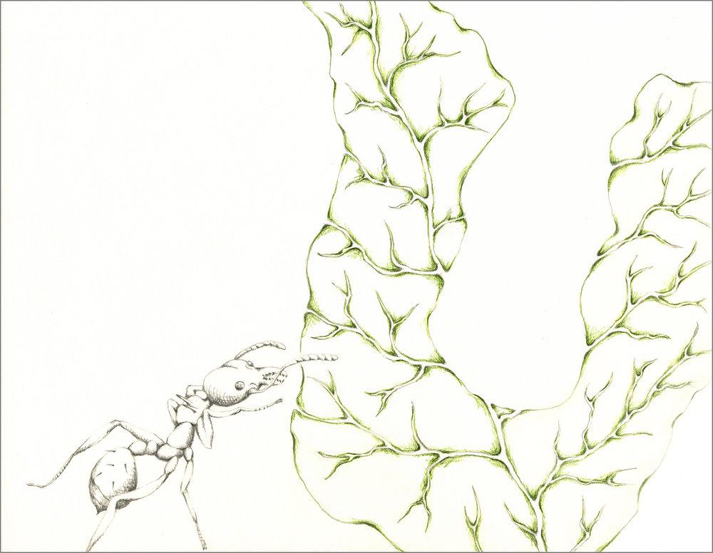 ant_draw_u_4g.jpg
