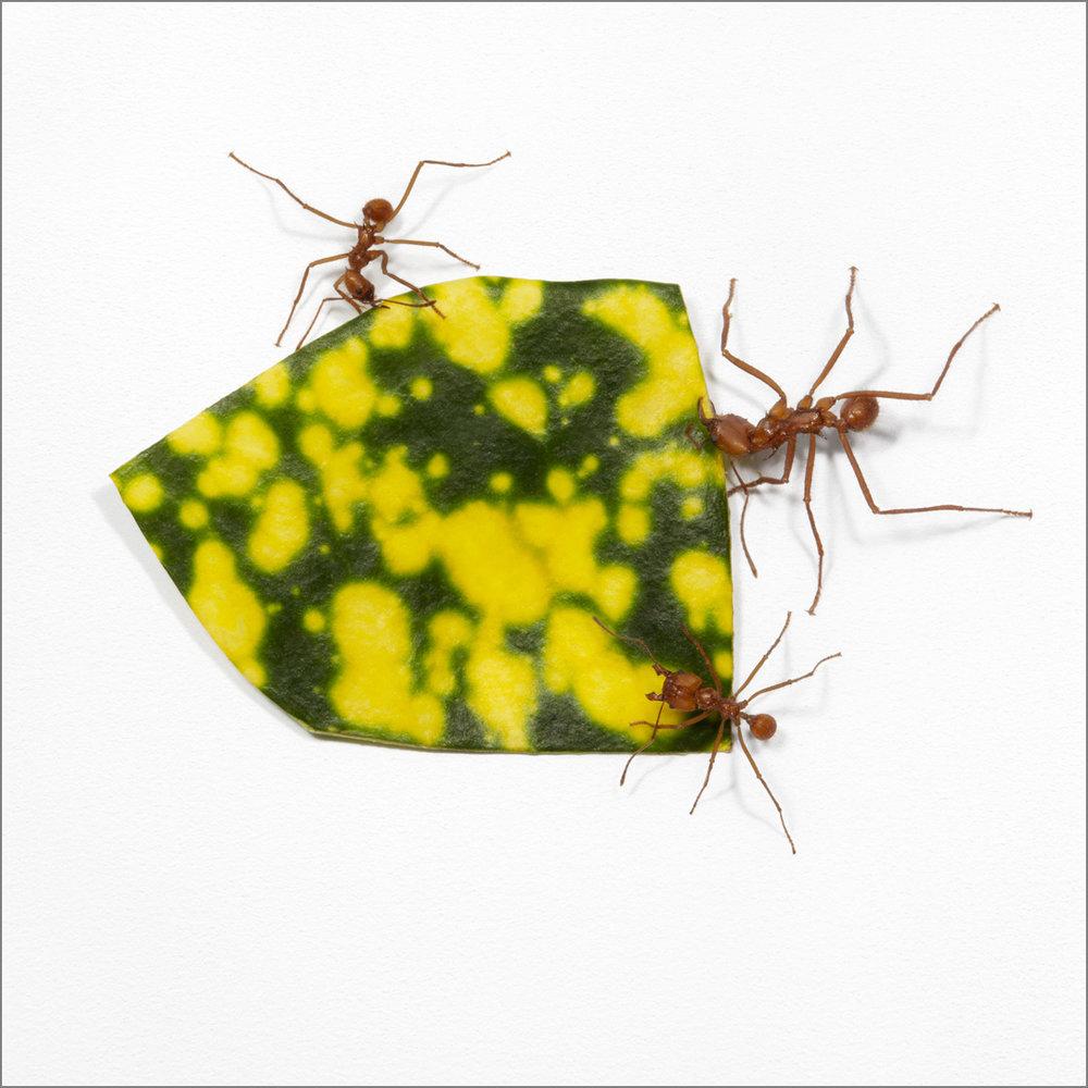 ant_art2_4g.jpg