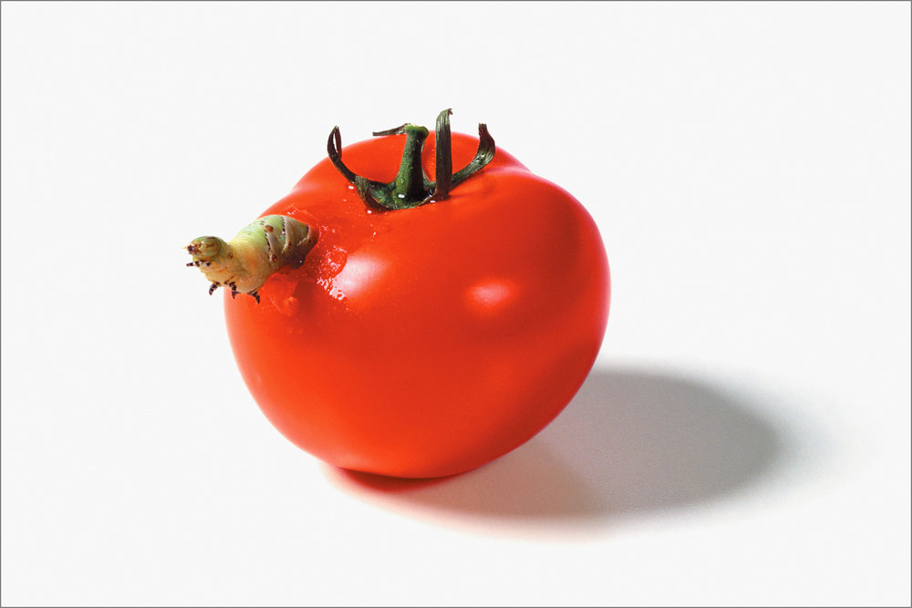 fc_tomato1_4g.jpg
