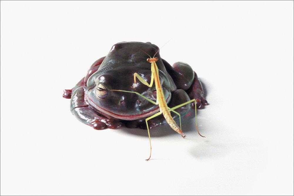 fc_frog2_4g.jpg