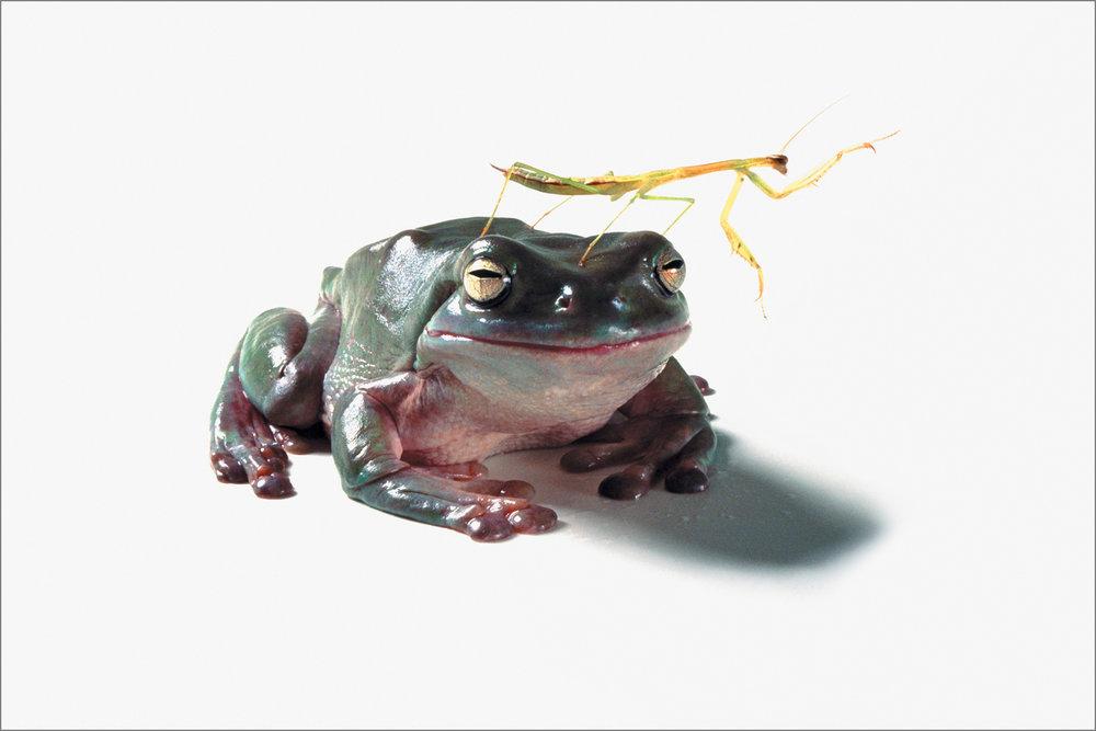 fc_frog4_4g.jpg