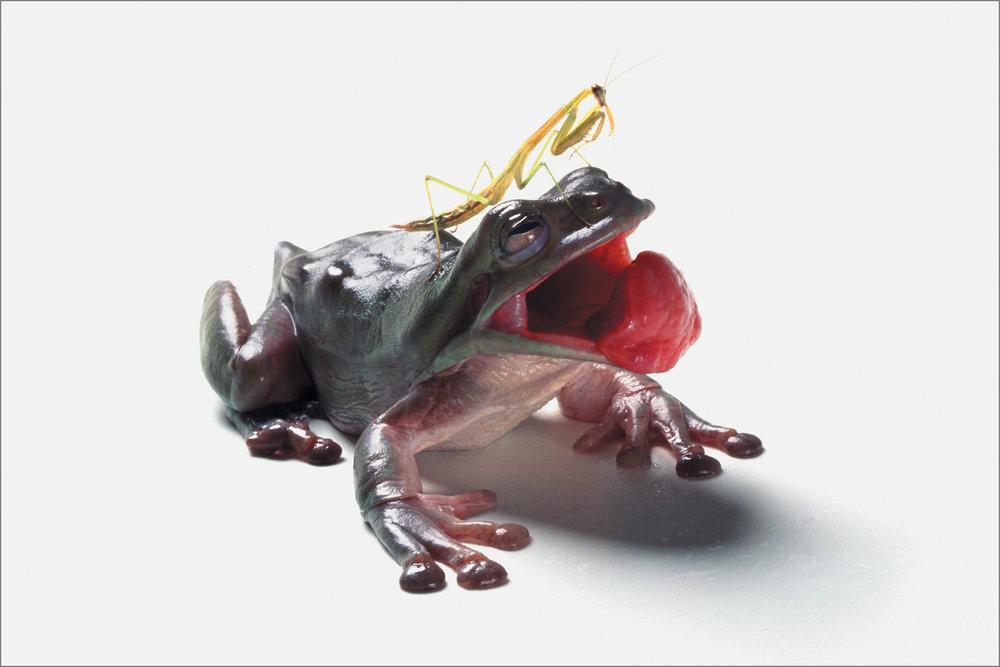 fc_frog6_4g.jpg