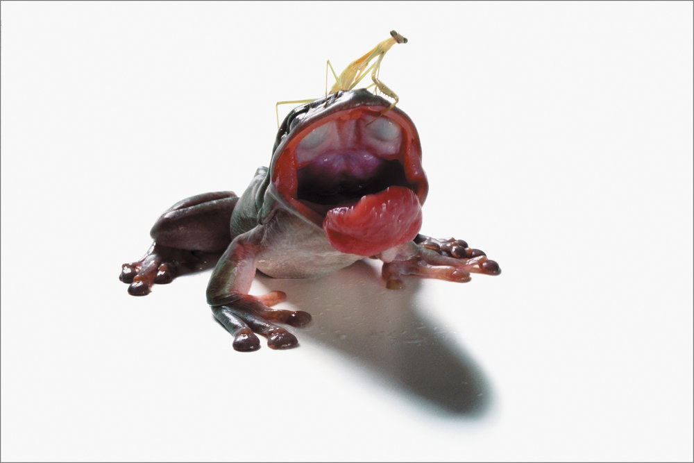 fc_frog7_4g.jpg