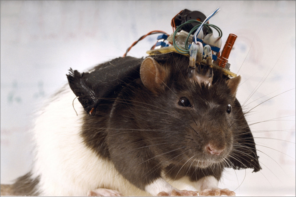 REMOTE CONTROLLED RAT