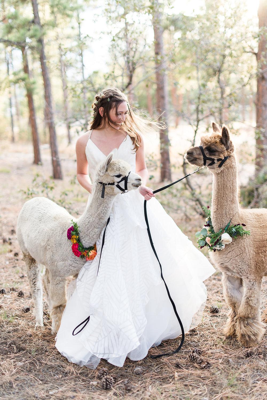 Hobby Lobby Wedding Planner Blog Colorado Kaitlin Shea Weddings