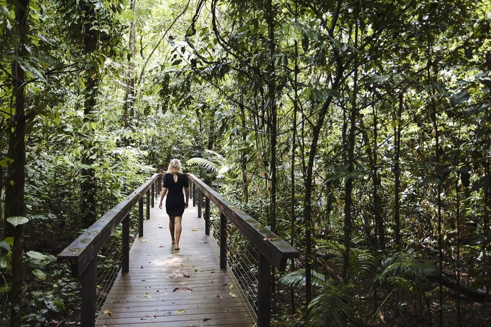 Daintree boardwalk-direct.jpg