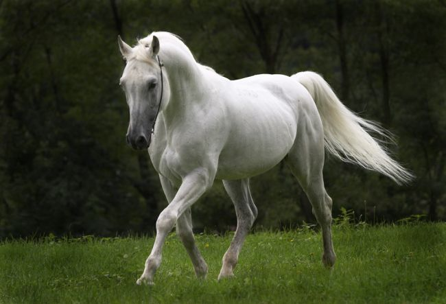 large-BeautifulHorse1197621074.jpg