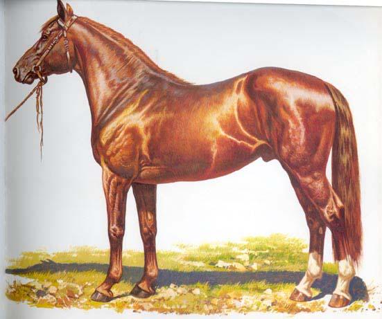 hanover_horse
