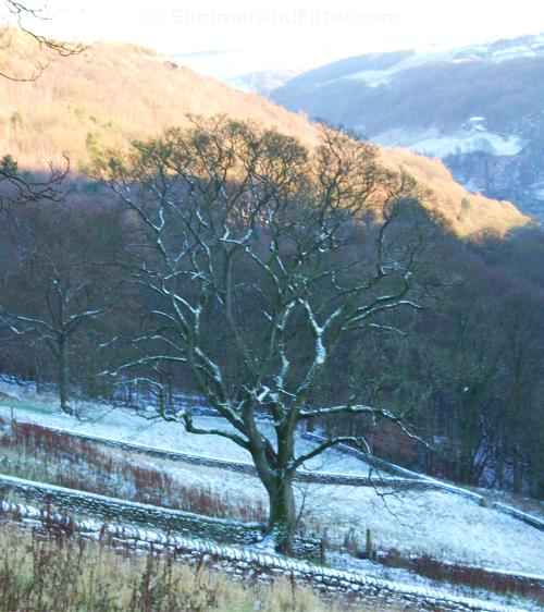 sunny-winter-day-colden-clough-bare-tree