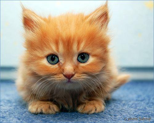 cute-kitten.jpg