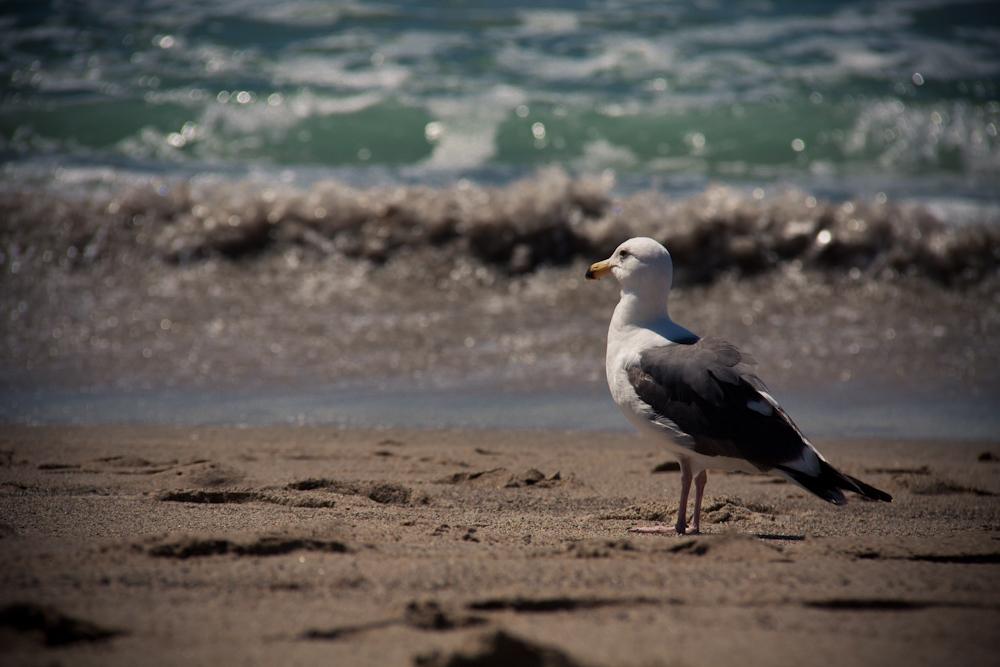 gesichtet am Malibu Strand