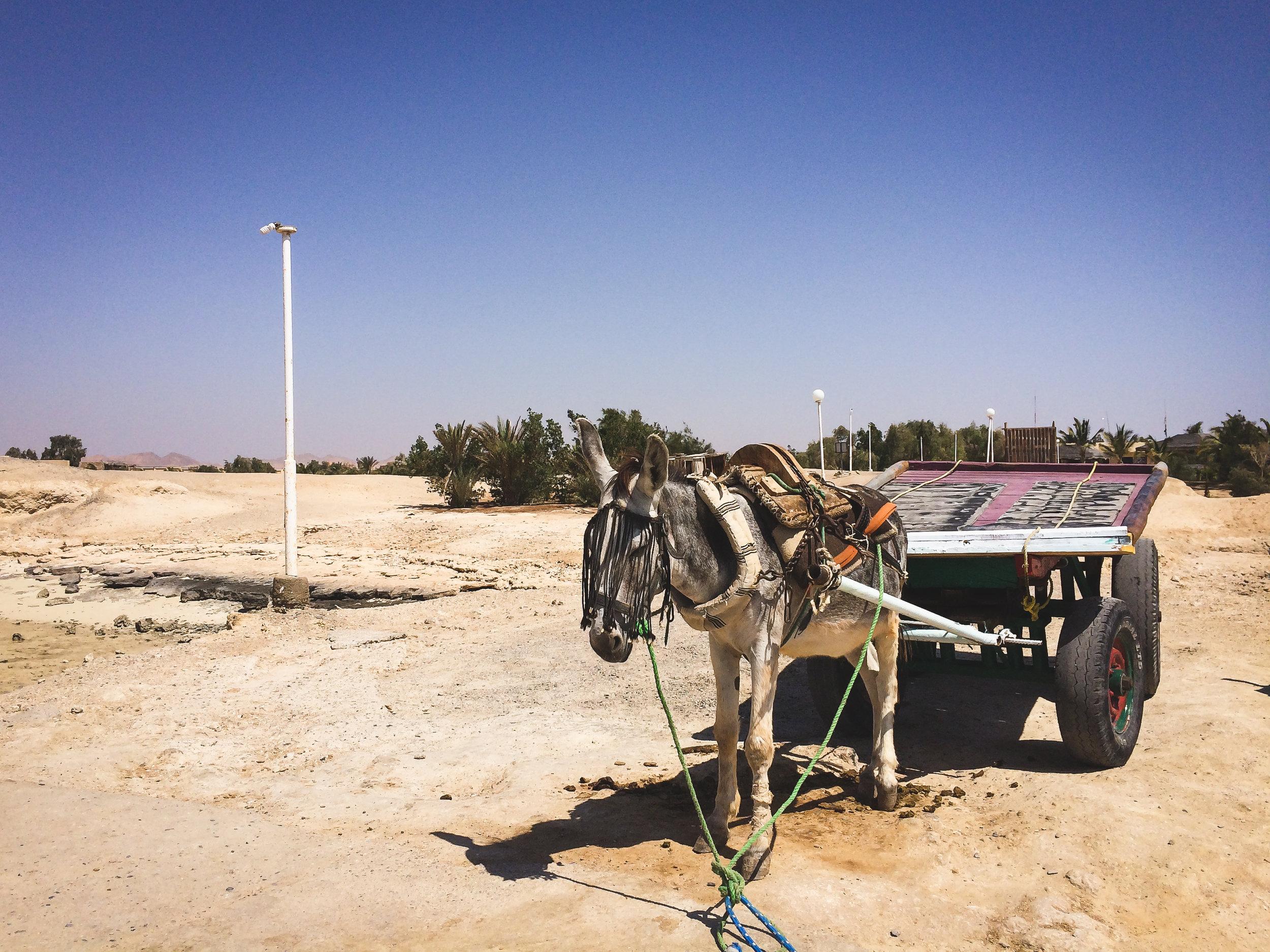 MangroveBay-Ägypten-20140609-16