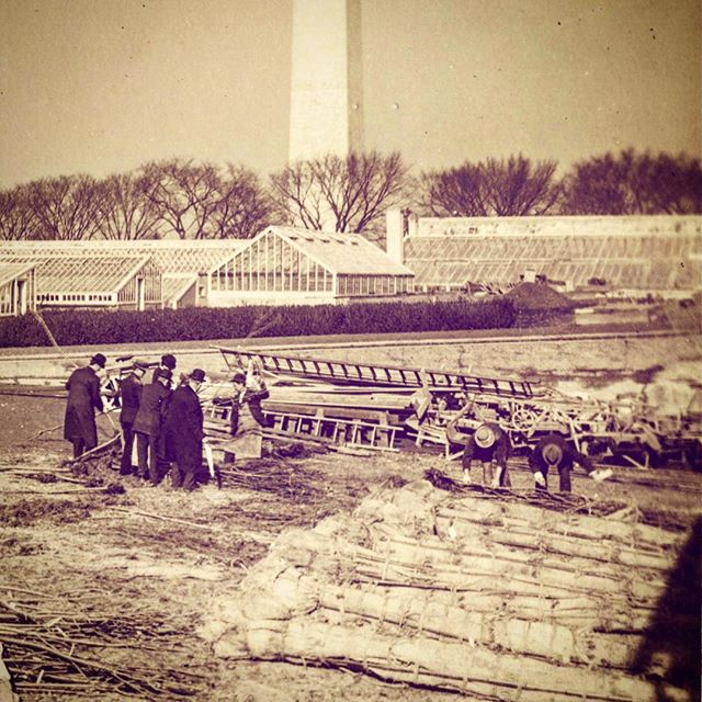 #onthisday (Jan. 28) in 1910 the original gift of ornamental cherry trees from Japan was burned in the shadow of the Washington Monument out of fears over invasive pests. Source: National Agricultural Library. #americancanopy #cherryblossom #americanhistory
