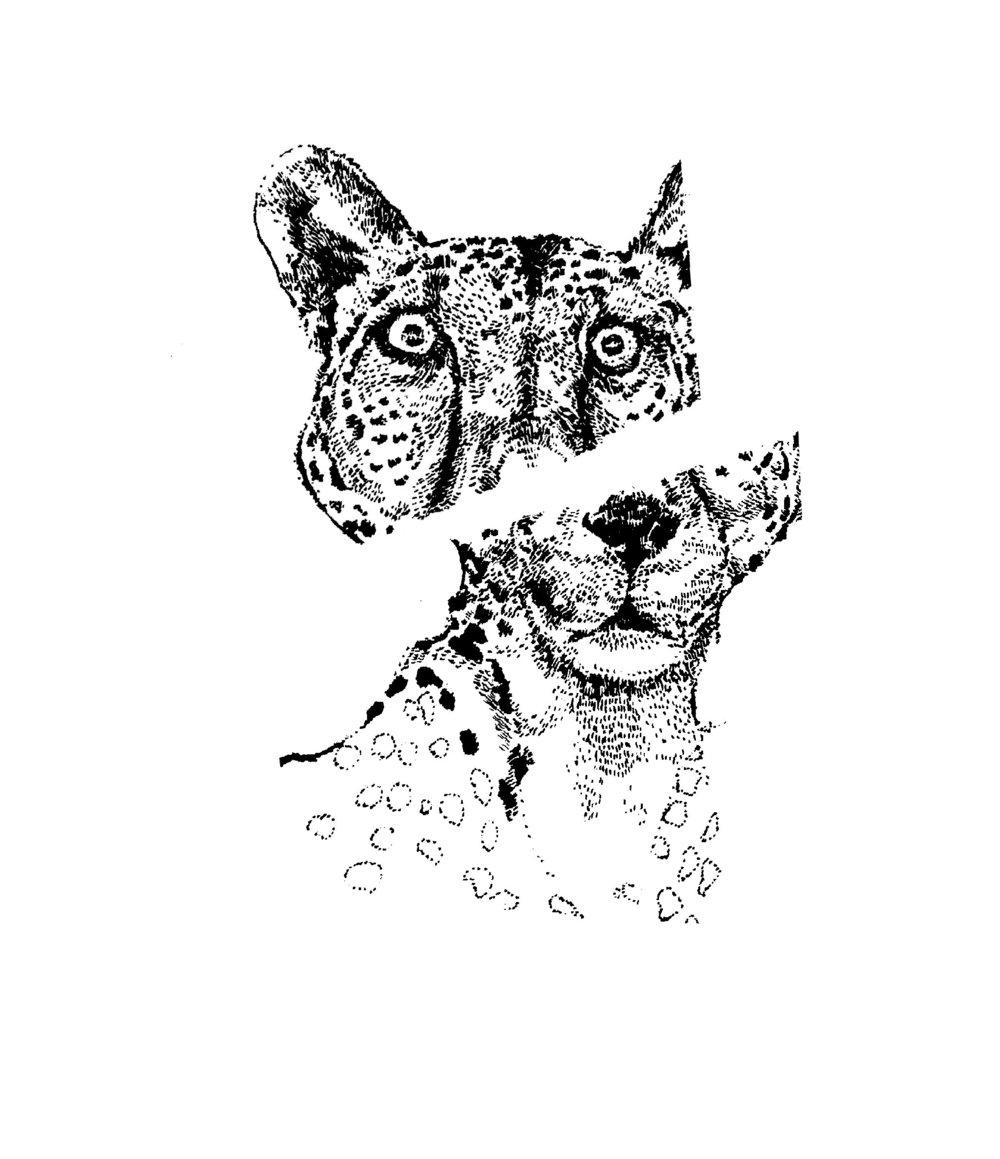 spots split.jpg