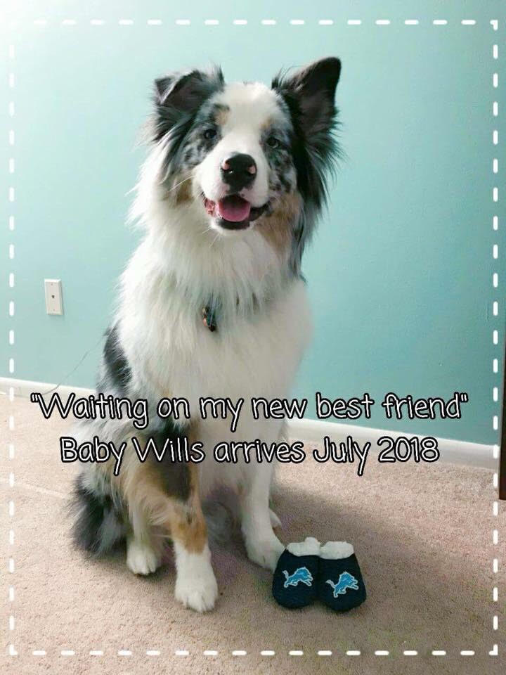 Our first fur baby, Hemsworth, announces our pregnancy to family and friends.