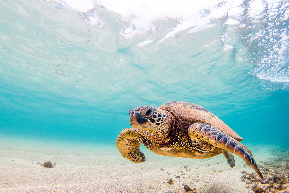 Sea Turtle Blog.png