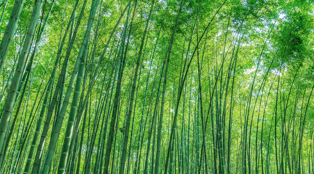 Blog Bamboo.png
