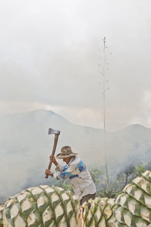 maguey, mi amor - Experience Oaxacan livlihood.
