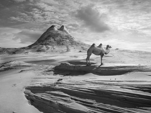 Camel Hill - Dariusz Klimczak