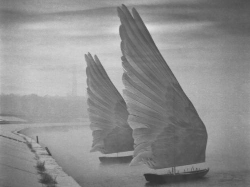 Taking Flight - Dariusz Klimczak